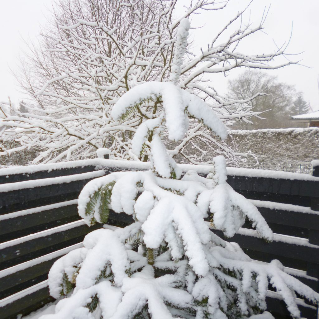 snepaagrene